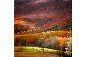 Photography: Autumn Colors